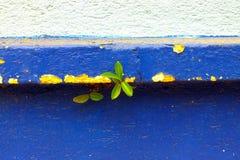 Les graines germent sur le mur photos libres de droits