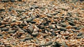 Les graines versent dans la pile banque de vidéos