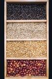 Les grains de café montrent de diverses étapes de vert de torréfaction à l'obscurité Photos stock