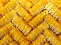 Les grains de maïs Images stock