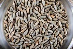 Les grains du maïs sèchent le macro en gros plan Photographie stock