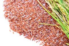 Les grains et l'oreille du riz de l'isolat de riz sur le fond blanc Photos libres de droits