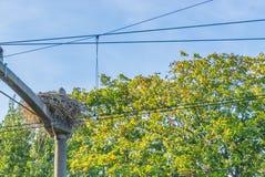 Les grandes cigognes nichent la construction sur un poteau au chemin de fer de train entre les cables électriques photographie stock libre de droits