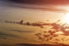 Les grandes mouettes blanches volent en mer au coucher du soleil Photographie stock libre de droits