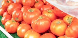 Les grandes tomates rouges ont admirablement arrangé sur une étagère Légumes de tomates à un marché ou à une épicerie d'agriculte Image stock