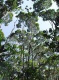 les grands arbres Стоковое Изображение RF