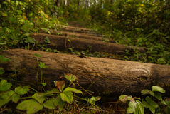 Les grands bois de construction en bois ont employé a intensifie un Park& boisé x27 ; chemin de s Photographie stock