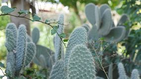 Les grands cactus se développent au soleil Photographie stock