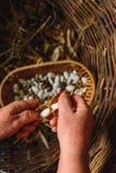 Les grands haricots blancs dans se dorent avec des cosses de haricots secs photos libres de droits