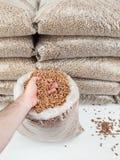 Les granules en bois équipe dedans la main Photographie stock libre de droits
