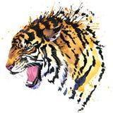 Les graphiques de T-shirt de tigre de grondement, tigre observe l'illustration avec le fond texturisé par aquarelle d'éclaboussur Photographie stock libre de droits