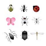 Les graphismes d'insectes ont placé Photos libres de droits