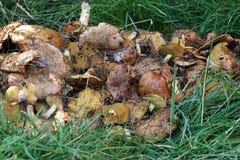 Les gresers rassemblés de champignons se trouvent sur le fond de l'herbe verte Images stock