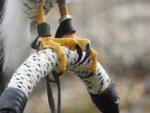 Les griffes de klaxon reflètent la puissance et la force photos stock