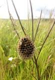 les guêpes ont fait un nid dans l'herbe images libres de droits