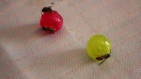 Les guêpes se reposent sur des sucreries clips vidéos