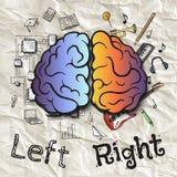 Les hémisphères gauches et droits du cerveau Photos stock
