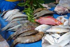 Les habitants de la mer profonde se sont présentés sur le marché de l'île de Rodrigues image stock