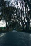 Les haies d'obscurité en Irlande du Nord Photo stock