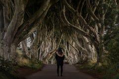 Les haies foncées, Irlande du Nord images libres de droits