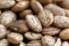 Les haricots de mélange se ferment vers le haut Photos stock