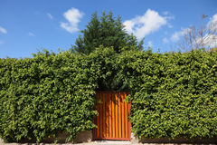 Les hautes haies et la porte en bois Photos libres de droits