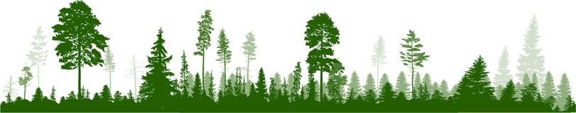 Les hauts pins verdissent le panorama de forêt sur le blanc illustration stock
