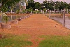 Les herbes brûlent vers le bas de l'effet d'herbicide d'émergence de courrier pour commander des herbes Images libres de droits