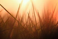 Les herbes soutiennent la lumière Photographie stock