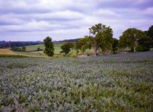 Les hils de roulement du Wisconsin cultive sous un ciel nuageux Images libres de droits