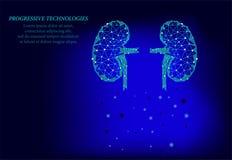Les hommes d'organe interne de reins silhouettent le modèle 3d géométrique Traitement de m?decine de syst?me d'urologie Future te illustration stock