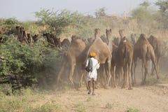 Les hommes indiens se sont occupés du chameau annuel Mela de Pushkar Photos stock