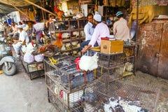 Les hommes indiens vendent leur poulet Image stock