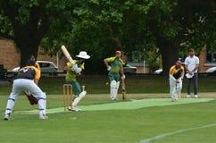 Les hommes jouent au cricket en parc de Victoria Auckland, Nouvelle-Zélande Images libres de droits