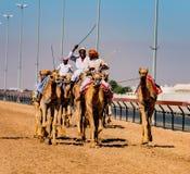 Les hommes montent des chameaux avec d'autres voisins au train pour emballer dans la fin photographie stock libre de droits