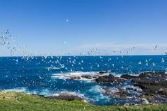 les hundrets des mouettes sont vol aux noobies en Philip Island, Victoria photo stock