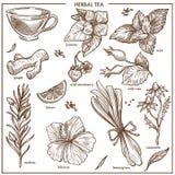 Les ingrédients naturels de tisane ont isolé les illustrations monochromes réglées Photo libre de droits