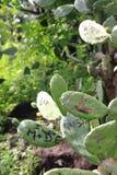 Les initiales de nom comme symboles de l'amour ont coupé dans le cactus Photos libres de droits