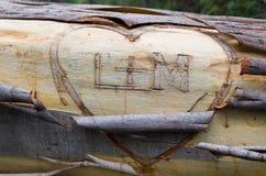 Les initiales des amants sur l'eucalyptus tombé photographie stock libre de droits