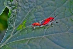 Les insectes multiples dessus aiment et d'affections d'usine de doigt de dames image stock