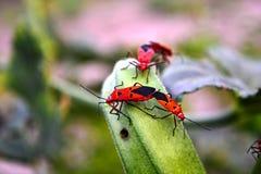 Les insectes multiples dessus aiment et d'affections d'usine de doigt de dames Images libres de droits