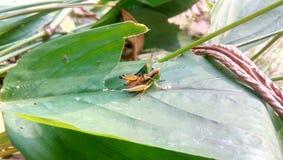 Les insectes vivent photos libres de droits