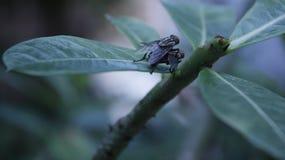 Les insectes vole dans le jardin sur la feuille verte avec le fond de tache floue Photo libre de droits