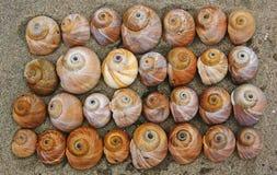 Les interpréteurs de commandes interactifs des escargots dans le sable. Photographie stock libre de droits