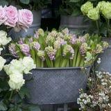 Les jacinthes de floraison de rose dans un bassin en aluminium parmi des roses Photographie stock libre de droits
