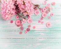 Les jacinthes et les fleurs de saule et les boutons roses sur la turquoise font souffrir Images stock