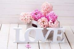 Les jacinthes fraîches de ressort fleurit dans la boîte et l'amour de mot sur le blanc courtisent Photographie stock