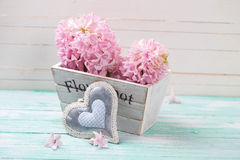 Les jacinthes roses fleurit à la boîte en bois et au coeur décoratif Image libre de droits