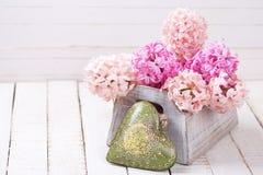 Les jacinthes roses fleurit à la boîte et au coeur décoratif de vert Photo stock