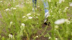 Les jambes de l'adolescence marchent par des fleurs d'herbe verte et de marguerite sur le pré banque de vidéos